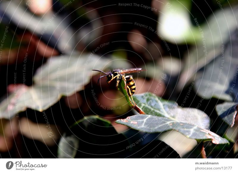 Summer Leaf Flying Bushes Wing Insect Climbing Wasps