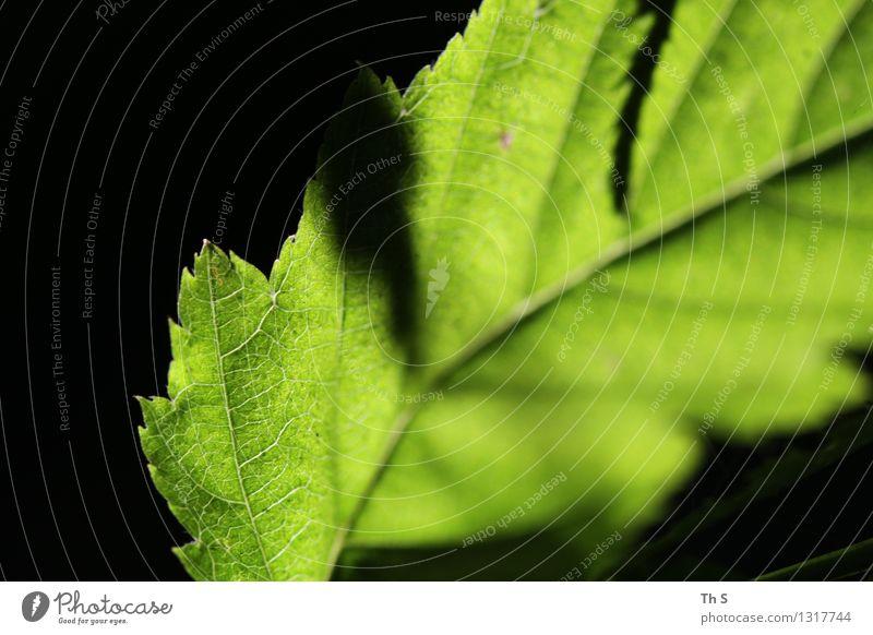 Nature Plant Green Beautiful Summer Leaf Calm Black Spring Natural Elegant Authentic Esthetic Blossoming Simple Uniqueness