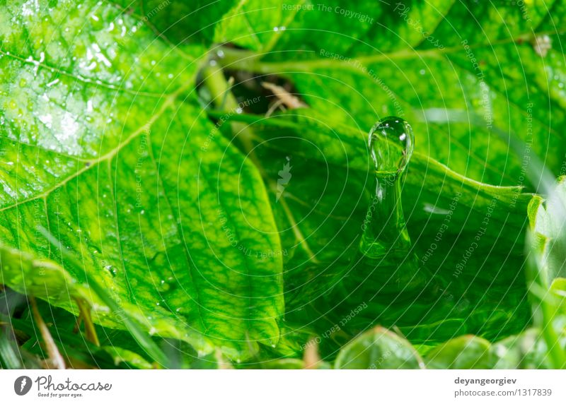 Water drop in the nature Environment Nature Plant Rain Leaf Drop Fresh Bright Wet Clean Blue Green Purity Colour water background clear raindrop falling liquid