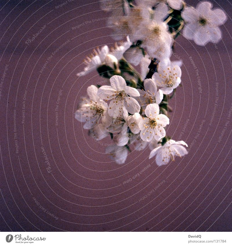 Tree Blossom Spring Fresh Branch Delicate Blossoming Seasons Twig Bud Graceful Wake up