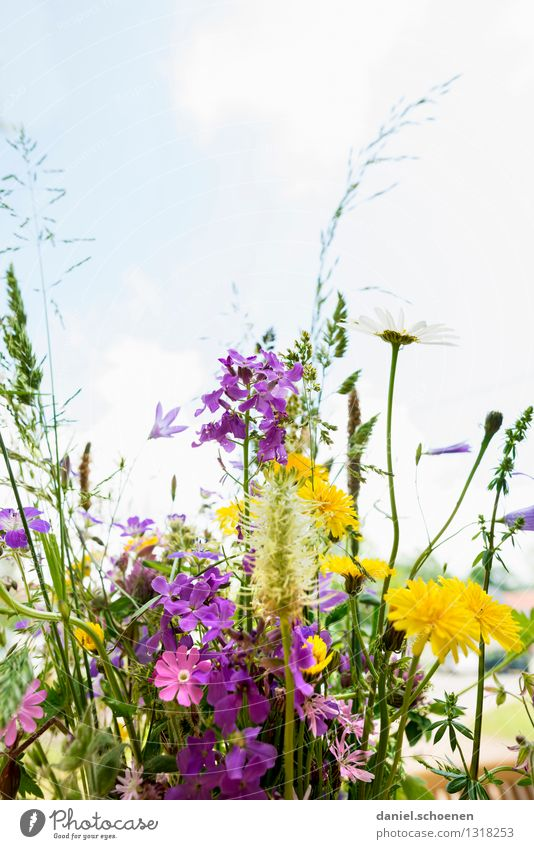 summer in sight Nature Plant Summer Flower Grass Leaf Blossom Fragrance Bright Multicoloured Yellow Green Violet Pink Ease Colour photo Deserted Copy Space top