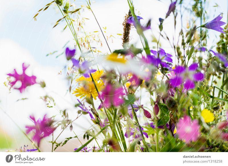 summer memory Plant Summer Flower Grass Leaf Blossom Bright Multicoloured Fragrance Colour photo