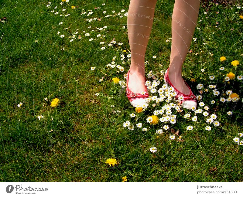 the red shoes Footwear Red Green Daisy Dandelion Meadow Beautiful Beautiful weather Flower Carpet of flowers Flower power Hippie Stand Going Calf Firm Joy