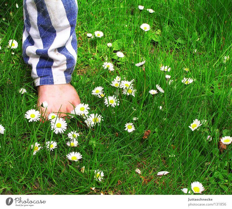 Child White Flower Green Blue Summer Joy Boy (child) Meadow Grass Garden Freedom Feet Legs Healthy Lawn