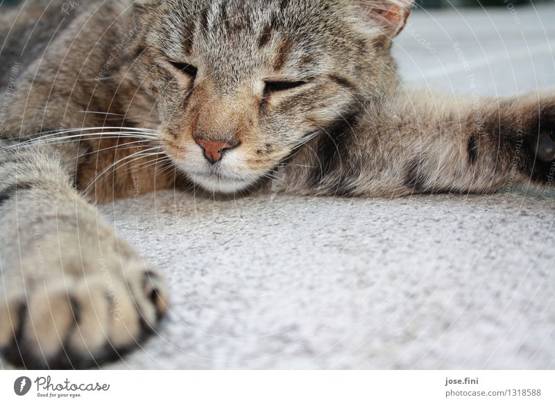 Cat Nature Relaxation Animal Healthy Happy Friendship Lie Contentment To enjoy Sleep Serene Harmonious Pet Animal face Paw