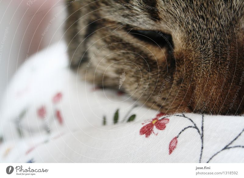 good morning cat Harmonious Senses Animal Pet Cat Animal face Pelt Domestic cat Duvet Bedclothes Flowery pattern Relaxation Sleep Happy Cuddly Contentment Joy