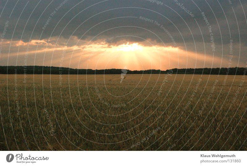Beautiful Summer Clouds Calm Field Idyll Romance Peace Grain Dusk Cornfield Ear of corn Summer evening