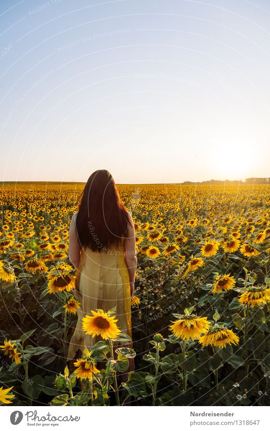 Human being Woman Summer Sun Relaxation Flower Loneliness Calm Adults Warmth Blossom Feminine Horizon Field Elegant Stand