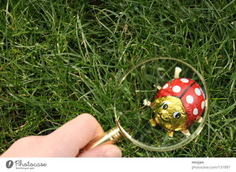 A Good Place For Ladybird Candy Enlarged Magnifying glass Search Easter Easter egg Grass Sherlock Holmes Tracks Spring Summer Insect Aluminium Metal foil