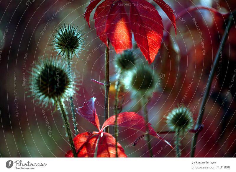 Autumn Impression Thorn Red Plant Animal September October Vine