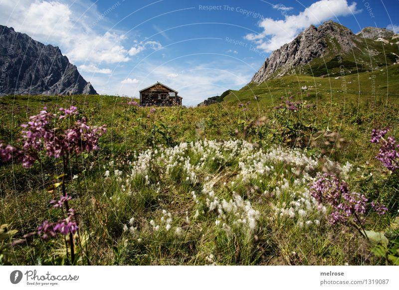 Sky Nature Blue Green Beautiful Summer White Relaxation Flower Landscape Clouds Mountain Grass Gray Brown Rock