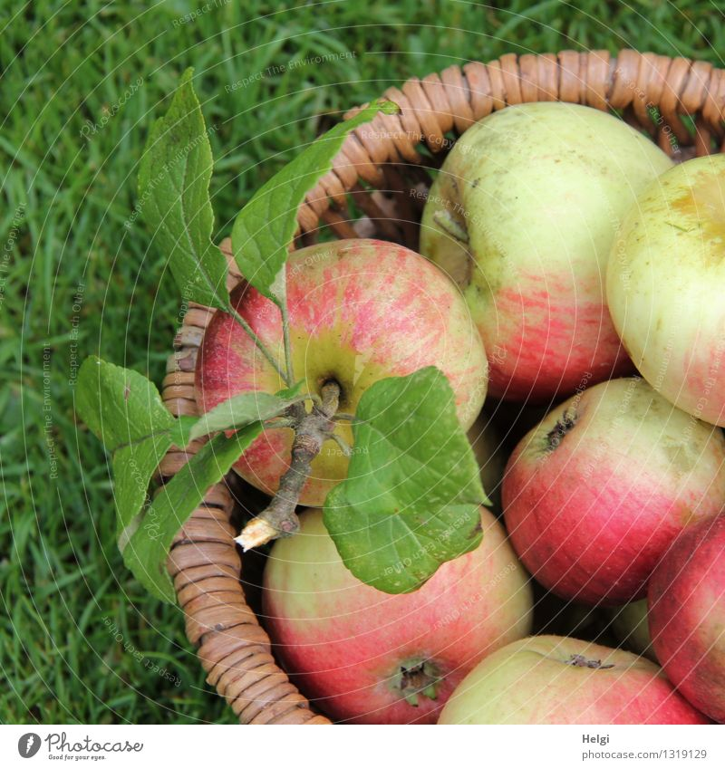 fresh, crunchy and tasty... Food Fruit Apple Nutrition Organic produce Vegetarian diet Nature Grass Leaf Basket Diet Lie Esthetic Fresh Healthy Delicious