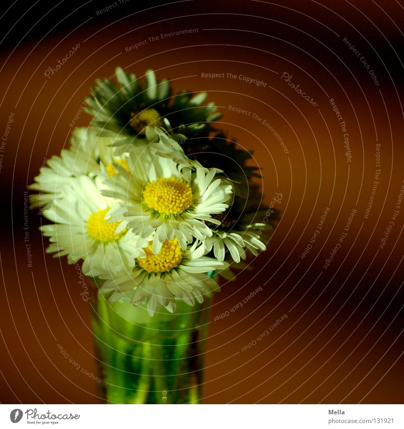 Light and shadow Flower Daisy Bouquet Joy Souvenir White Yellow Mother's Day Vase Spring Sprout Growth Picked Plant Ecological Environment