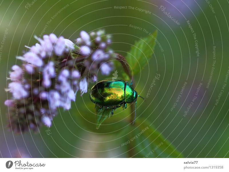 Nature Plant Green Summer Leaf Animal Life Blossom Healthy Garden Health care Glittering Fresh Blossoming Violet Insect