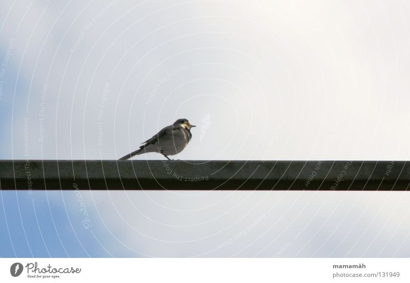 Sky Clouds Loneliness Bird Sit Feather Handrail Beak Rod Whistle Chirping