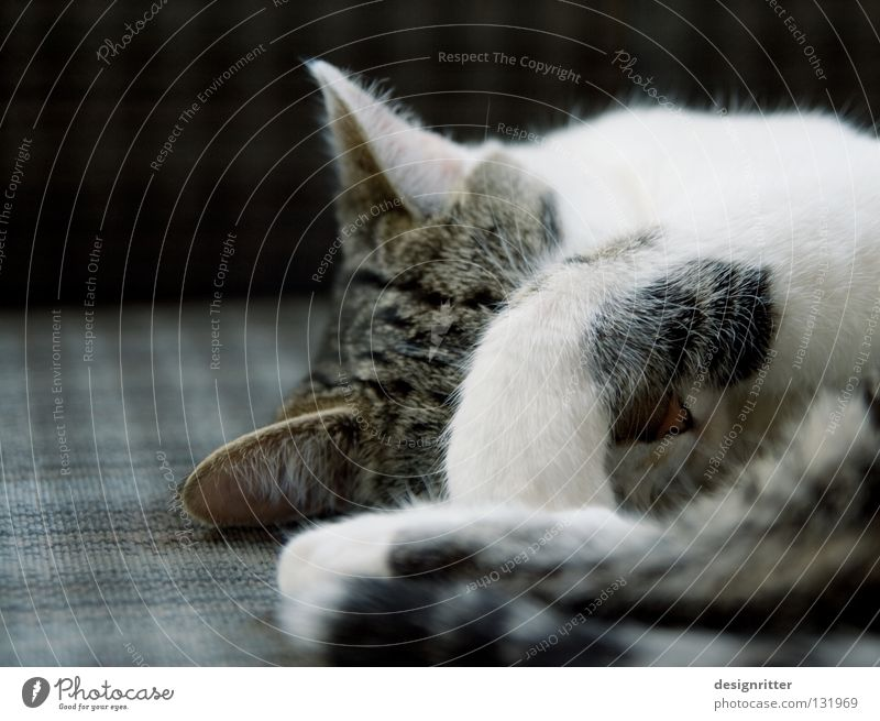 Cat Sleep Fatigue Paw Mammal Domestic cat Cancelation Alert Wake up Defensive Arise Keep sth. closed  Defend Retreat Ignore