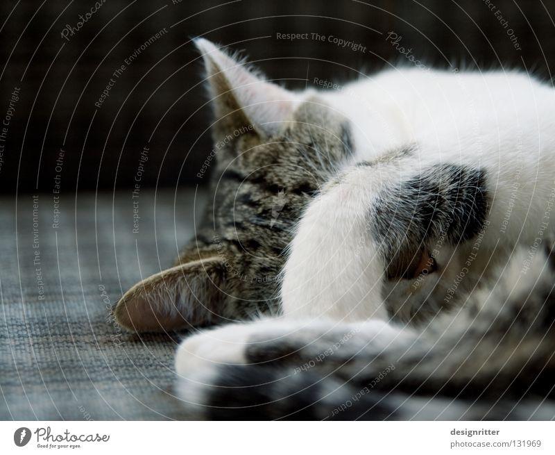 Cat Sleep Fatigue Paw Mammal Domestic cat Cancelation Alert Wake up Defensive Arise Keep sth. closed  Wake Defend Retreat Ignore