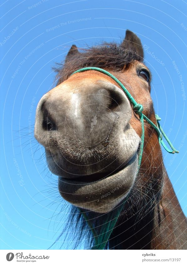 Nature Blue Animal Brown Free Horse Curiosity Animal face Brash Muzzle