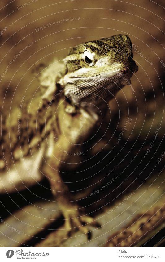 Animal Eyes Sand Laughter Feet Mouth Skin Speed Floor covering Might Cool (slang) Curiosity Desert Serene Zoo Brave