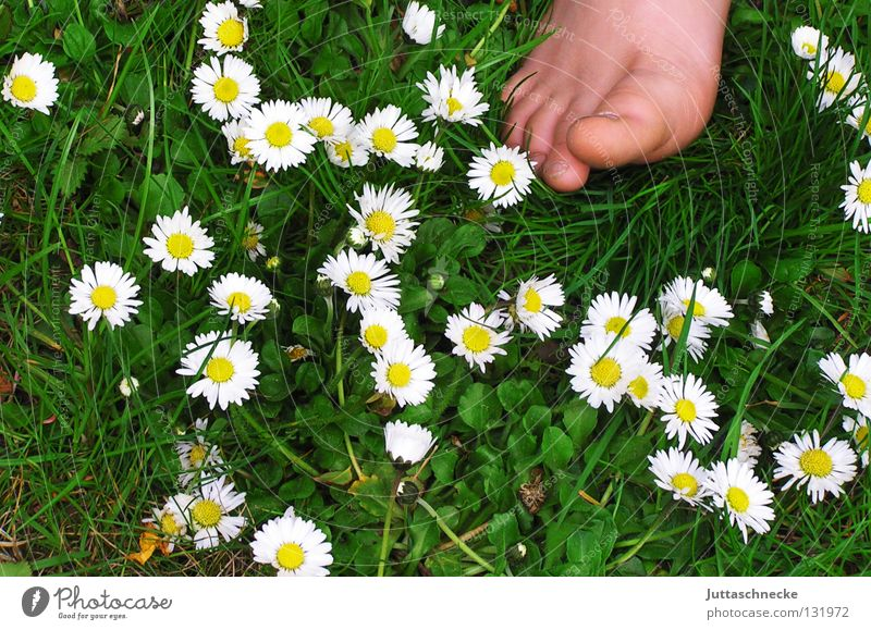 Good morning! Good morning! Toes Barefoot Healthy Daisy Meadow Flower meadow Grass Children's foot Toenail Happiness Summer Spring Blossom Green White