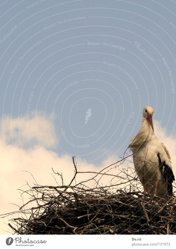 Human being Nature Loneliness Clouds Bird Flat (apartment) Birthday Wait Bushes Branch Twig Beak Blue sky Nest Stork