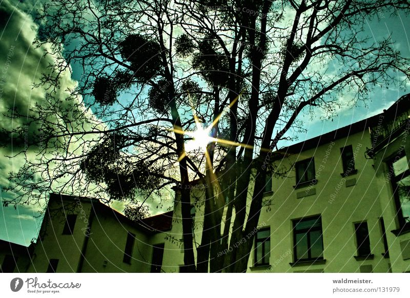 Sky Tree Sun House (Residential Structure) Clouds Window Historic Backyard Mistletoe