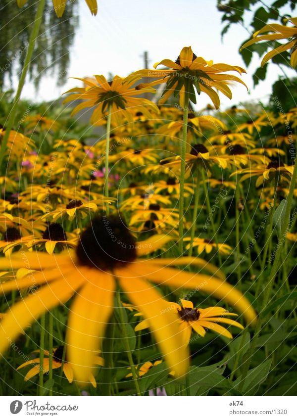 yellow Yellow Flower Sky