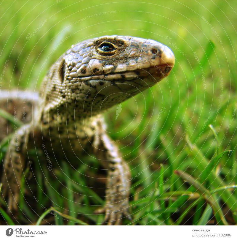 INSANE ALREADY IN NONSENSE GARDEN II Saurians Lizards Animal Reptiles Impish Blur Furrow Grass Blade of grass Green Dinosaur Leather Pattern Multicoloured