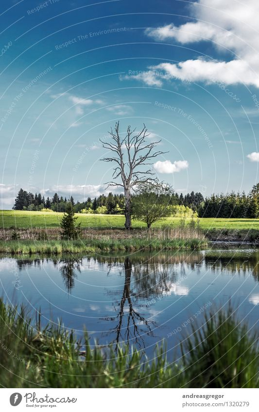 collateral beauty Environment Nature Landscape Water Sky Clouds Spring Summer Climate Weather Beautiful weather Tree Grass Forest Bog Marsh Pond Lake powerling
