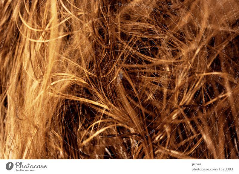 Airy Hair Door Elegant Style Design Beautiful Hair and hairstyles Wellness Harmonious Relaxation Human being Feminine Woman Adults Head Brunette Blonde