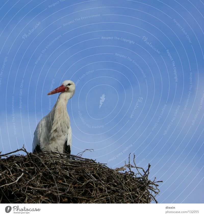 baby-delivery-service-central-store #2 Stork White Stork Stride bird Migratory bird Beak Clouds Bird Offspring Nest Bushes Love and security Birth