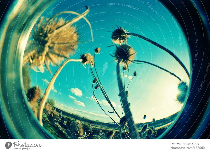 GLOBES Sun Sunbeam Summer Grass Blade of grass Plant Thorny Absorbent cotton Soft Wind Breeze Morning Fisheye Round Snapshot Wide angle Washer Analog Nature