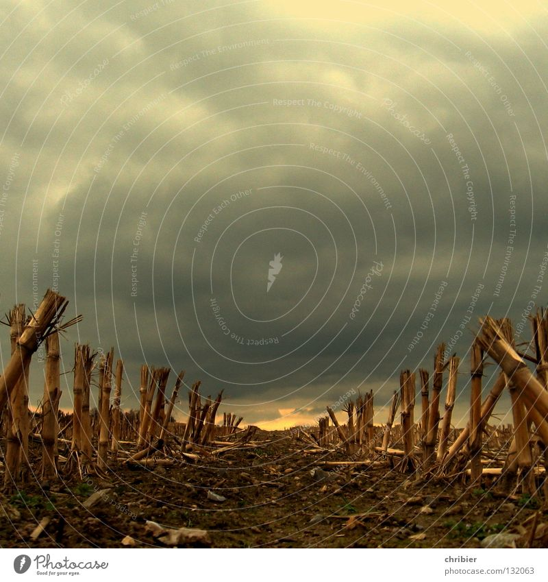 Plant Clouds Yellow Autumn Gray Rain Landscape Brown Field Food Gold Horizon Earth Growth Threat Harvest