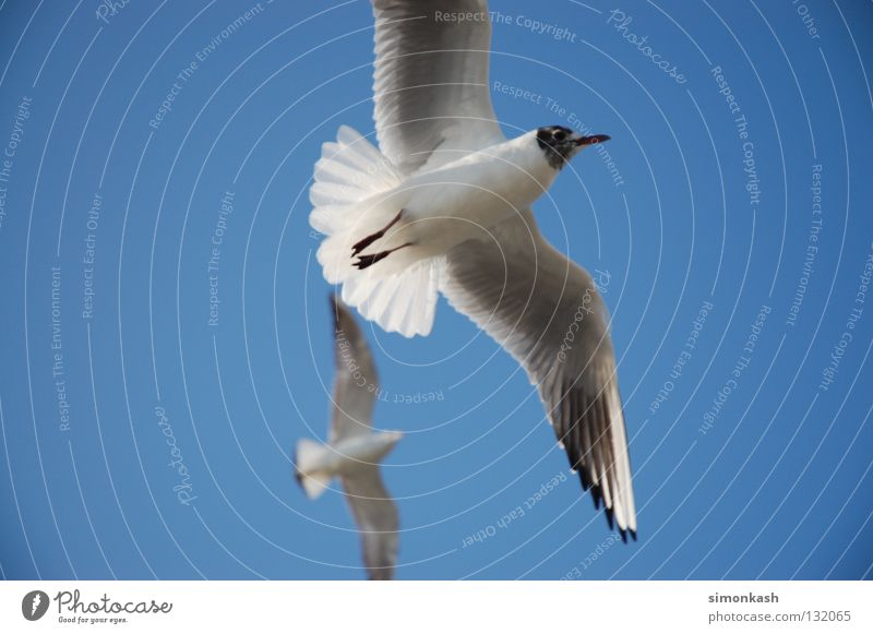 Sky Blue Summer Bird Flying Peace Wing Beautiful weather Seagull