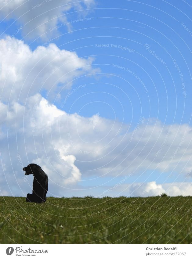 Man Sky White Sun Green Blue Black Clouds Animal Meadow Grass Spring Dog Landscape Field Sit