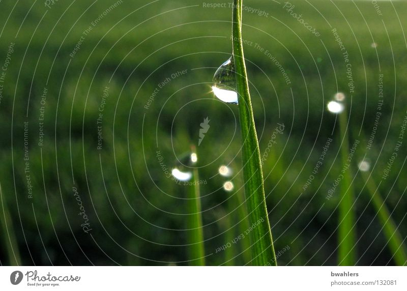 Water Green Meadow Grass Drops of water Wet Dew Blade of grass
