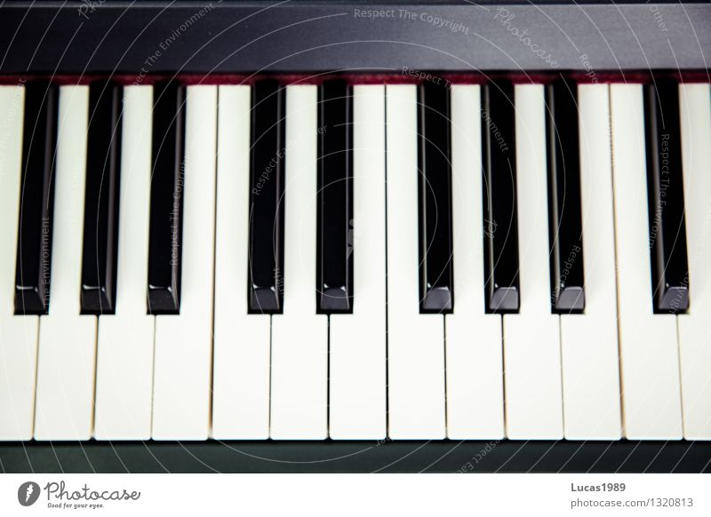 White Black Art Music Wing Student Concert Keyboard Piano Musician Classical Jazz Keyboard Listen to music Music tuition