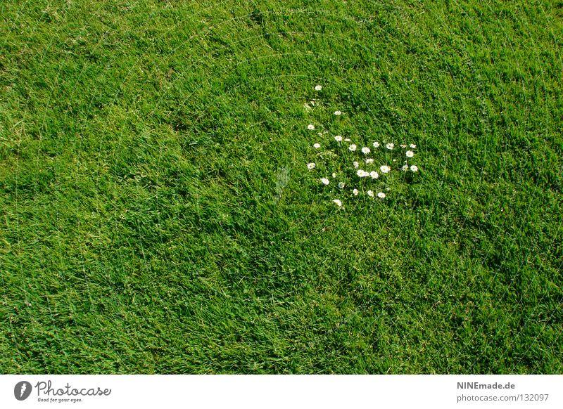 Nature Green Summer Flower Meadow Grass Spring Blossom Garden Park Heart Lawn Daisy Blade of grass Heap Attack