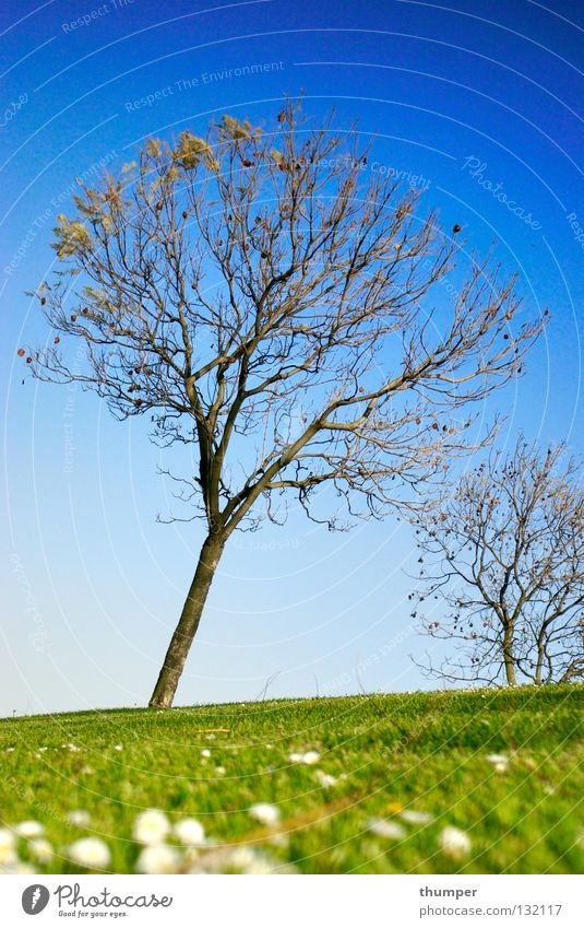 TREE Jump Normal Spring trees outside beautiful natural basic earth