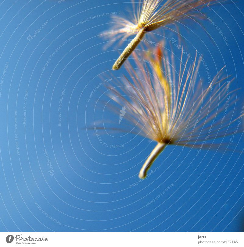 Sky Flower Freedom Flying Peace Dandelion Seed Hover