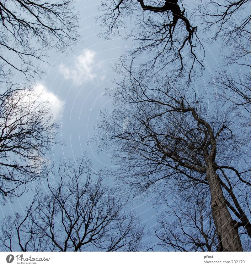 Nature Sky Tree Blue Calm Clouds Forest Autumn Wood Sadness Warmth Brown End Branch Transience Delicate