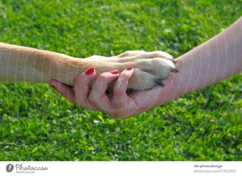Girl with red nails holding a dog paw Feminine Hand 1 Human being Pet Dog Love Joy Friendship Team Teamwork girl friend affection meadow green brown