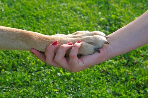Human being Dog Hand Joy Love Feminine Friendship Team Pet Teamwork