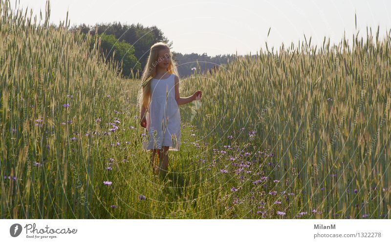Human being Child Beautiful Summer Sun Girl Emotions Movement Healthy Happy Think Moody Field Free Infancy Blonde