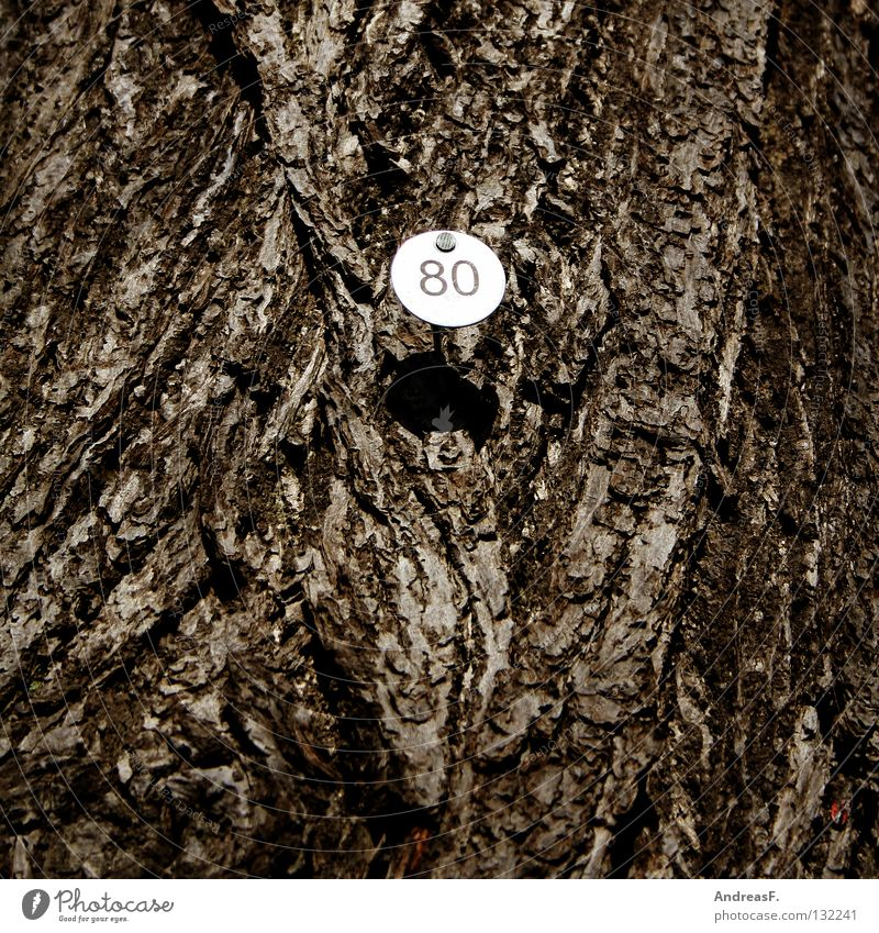 Eighty 8 Tree Wood Tree bark Digits and numbers Jubilee 80 eighty Signs and labeling Numbers counted tree counting eightieth