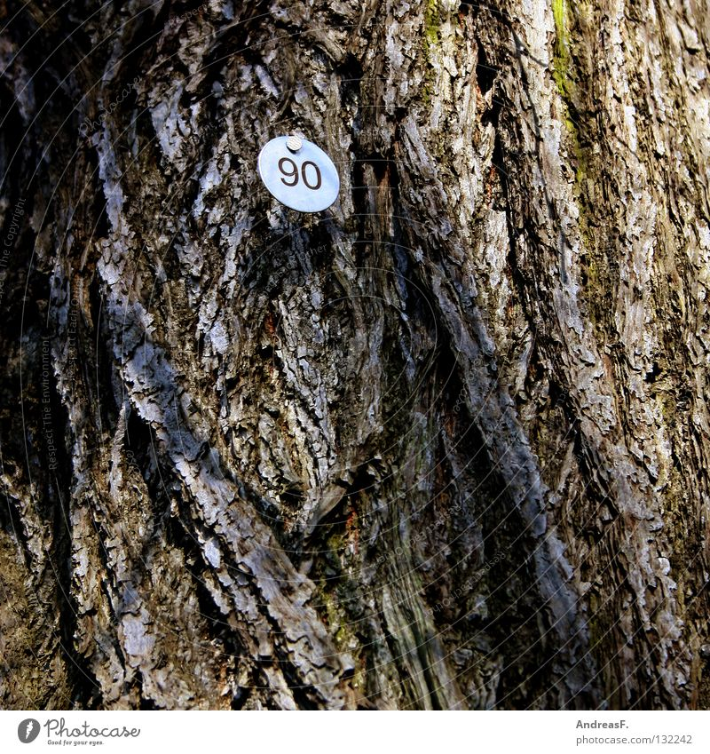 Ninety 8 Tree Wood Tree bark Digits and numbers Jubilee 90 eighty Signs and labeling Numbers counted tree counting Old ninetieth