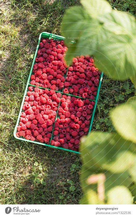 Raspberries in a green crate Summer Red Leaf Black Natural Garden Bright Fruit Fresh Delicious Berries Dessert Vitamin Diet Crate Raw