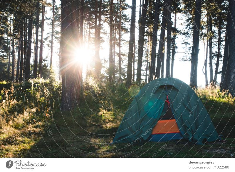 Tent in the forest on sunlight Beautiful Relaxation Leisure and hobbies Vacation & Travel Tourism Trip Adventure Camping Summer Sun Hiking Nature Landscape Tree
