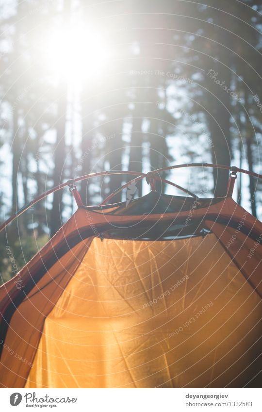 Tent in the forest on sunlight Beautiful Relaxation Leisure and hobbies Vacation & Travel Tourism Trip Adventure Camping Summer Sun Nature Landscape Tree Grass