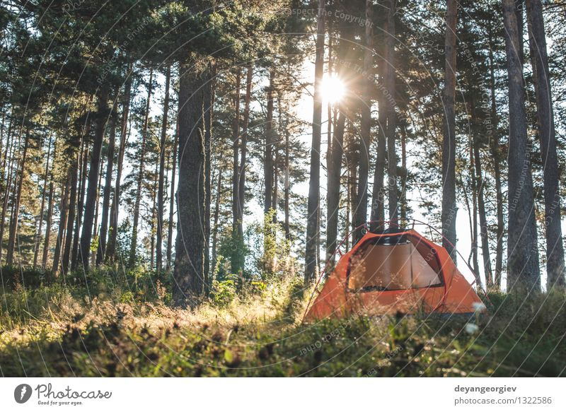 Tent in the forest on sunlight Nature Vacation & Travel Green Beautiful Summer Sun Tree Relaxation Landscape Forest Grass Park Leisure and hobbies Tourism